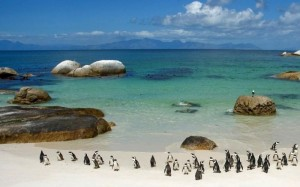 The Natural Beauty of South Africa